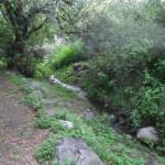 arroyon